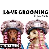 LOVE GROOMING